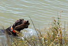 ... Dogs Working Sheep Dog Gundog Retrieving Trials Dog Agility Trials: diydoggrooming.com/activities