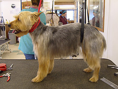 Prepare yourself for grooming your dog at home no solutioingenieria Choice Image
