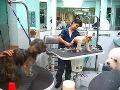 Prepare yourself for grooming your dog at home diy dog grooming before getting started with the actual dog grooming solutioingenieria Images