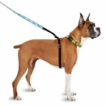 new-thunderleash-for-dogs-4